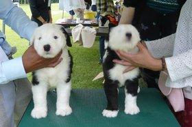 20090823_puppy.JPG